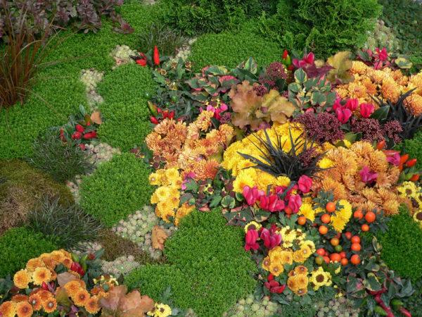 Floristik Neu, Rösrath | Grabpflege, Strukturbeet Herbst